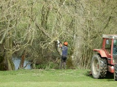 Coppicing by the river